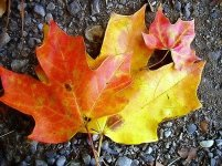 autumn_fall_nature_57384_l